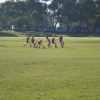 U13 Interleague Carnival