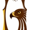 Boroondara Hawks JFC